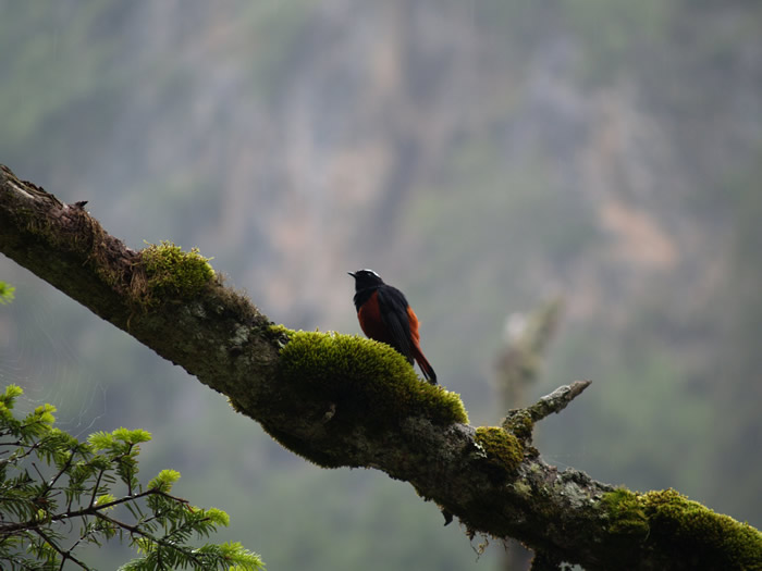 little birdie