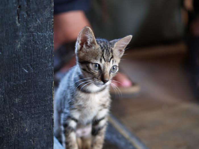 桌下的小貓